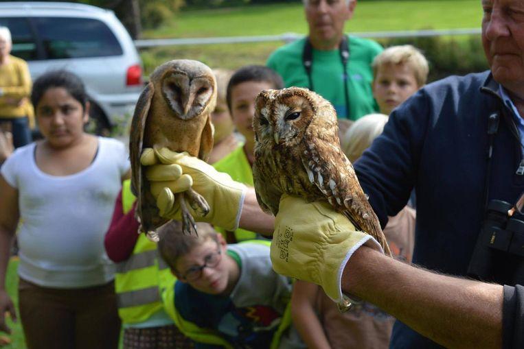 In het kasteeldomein Wissekerke kregen twee uilen hun vrijheid terug.