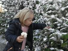Verkoop kerstbomen piekt in Zeeland steeds vroeger, Nordmann het populairst