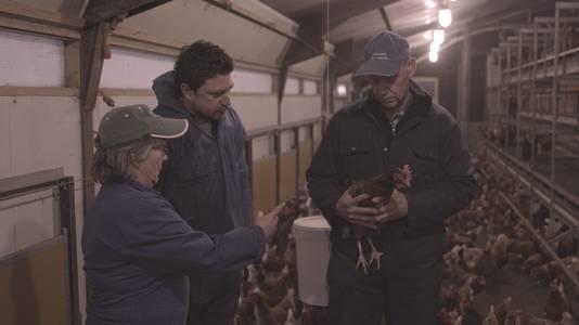 Kippen die 3 sterren-waardig zijn volgens het Beter Leven-keurmerk leven veel buiten.