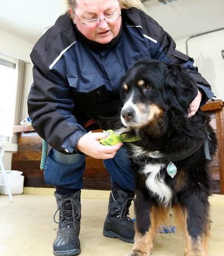 EHBO voor honden: mond-op-snuit