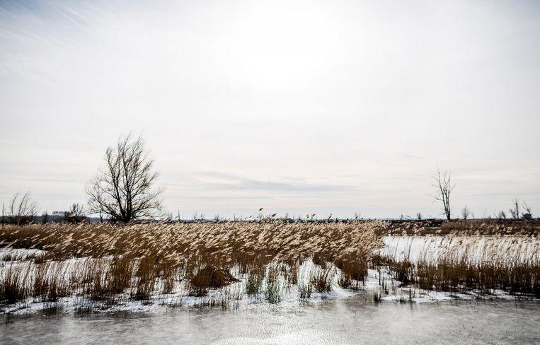 Bevroren sloot in het natuurgebied van Staatsbosbeheer in de Flevopolder. Beeld anp