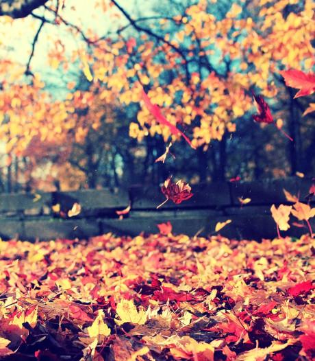 'Toe aan rust? De herfst is dé tijd van loslaten'