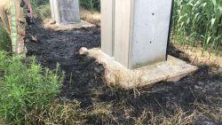 Meeuw wordt geëlektrocuteerd, valt van hoogspanningslijn en zet gras in brand