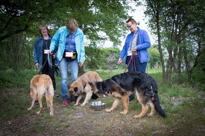 De buurvrouwen uit De Oude Vaart lassen even een pauze in om hun honden te laten drinken.