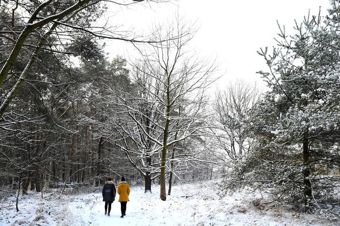 De besneeuwde Oude Buisse Heide. Het landgoed telt diverse wandelroutes.