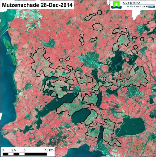 Een satellietfoto van Friesland. Op de omcirkelde plekken is sprake van een muizenplaag.