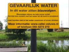 Nijkerk waarschuwt voor blauwalg in Arkervaart