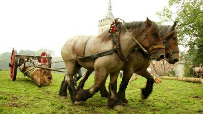 Duw in rug voor Brabants trekpaard