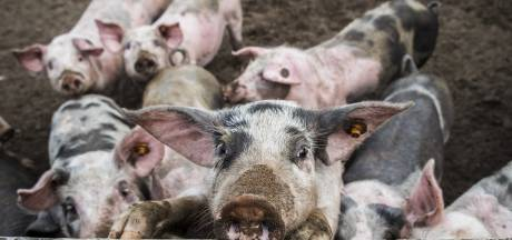 Boerenbedrijf uit Wierden waar vee in eigen mest zwom moet verbeteren, anders gaat zaak op slot