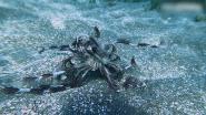 Duiker ontdekt bizar dier op zeebodem