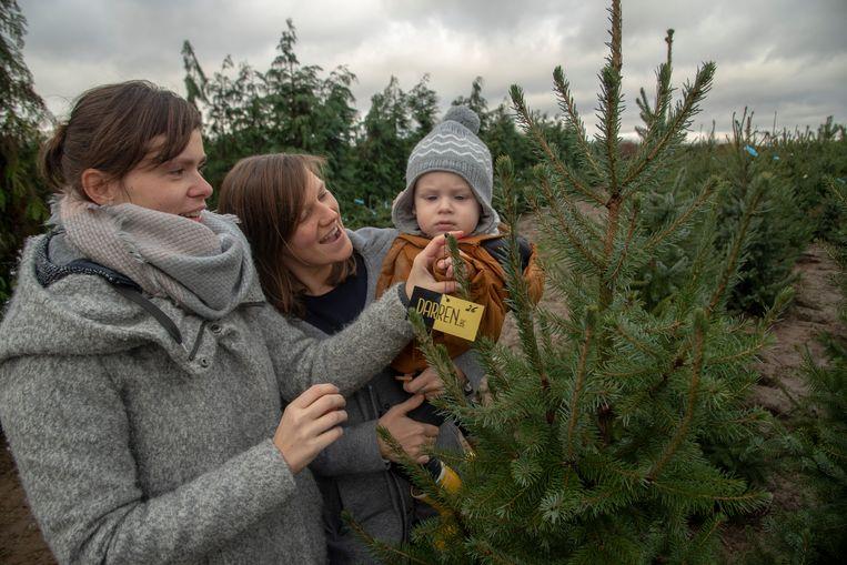 In een veld in Wetteren kon iedereen zijn eigen kerstboom kiezen en kopen. Liesbeth, Cyriel en Elke vonden de mooiste van allemaal.