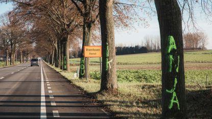 IN BEELD. Bomen in Riemst 'beklad' met opmerkelijke liefdesboodschap