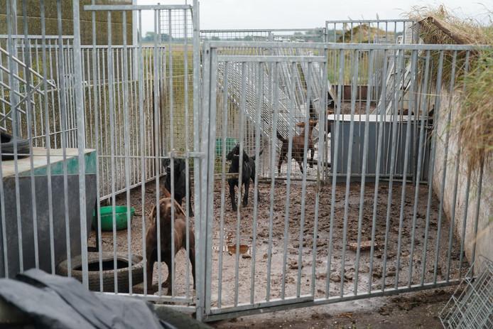 De dieren leefden onder slechte omstandigheden.