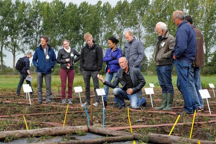 In het veenweidegebied in het Groene Hart wordt uitleg gegeven over natte teelten, die helpen om bodemdaling te reduceren.