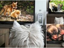 Hond Spike zit met het gezin aan de buis gekluisterd