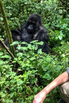 Reis naar Rwanda? Niet alleen berggorilla's zijn de moeite waard