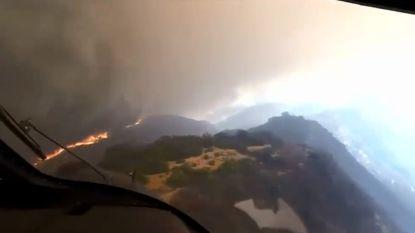 VIDEO. Brandweer redt hond uit bosbranden in Californië
