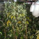Wietplanten in de kelder.
