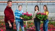 Chrysantenkweker Gediflora roept bedrijven op om bloemen te kopen voor personeel met 'Flower Boost Challenge'