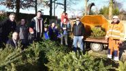 Kerstbomen niet verbrand, maar verhakseld in milieupark