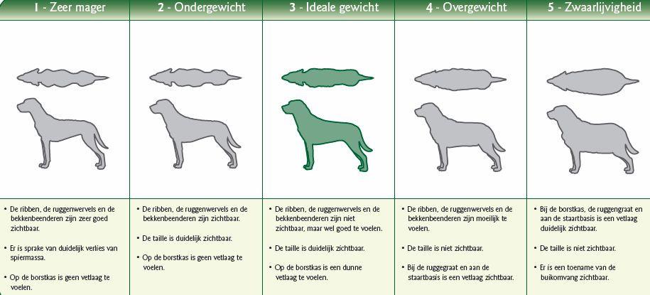 De criteria waarmee je kunt bepalen of je hond of kat te zwaar is.