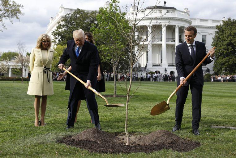 Het eikenboompje moest kort nadat het geplant werd alweer de grond uit.