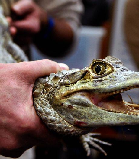Dierenbeschermers willen verbod op reptielenbeurs in Houten: 'Kan in coronatijd niet door de beugel'