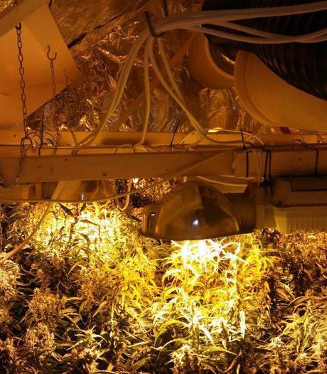 Wietkwekerij met 526 planten ontmanteld in Herwen