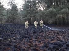 Halve hectare bos verbrand in grensgebied bij Reusel