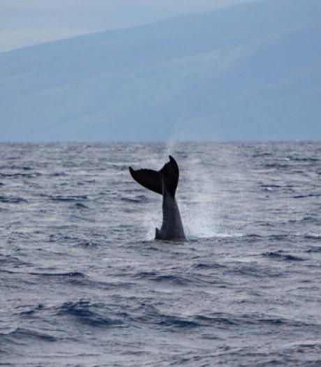 Les océans manquent d'oxygène