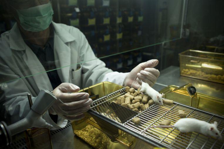 Kankeronderzoek met muizen bij de universiteit van het Spaanse Salamanca. Beeld Hollandse Hoogte