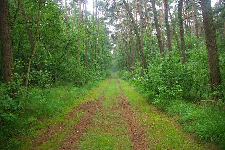 Bouwelse Heide