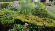 Oud-Heverlee moedigt burgers aan om label natuurlijke tuin te halen