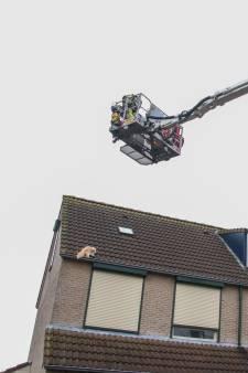 Niemand kreeg kat Hoop uit Urk van het dak en dus moest de brandweer komen. Wat er toen gebeurde...