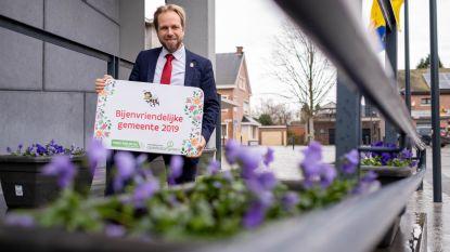"""Rumst krijgt titel 'Bijenvriendelijke gemeente': """"We kunnen nog meer doen, ook onze inwoners kunnen helpen"""""""