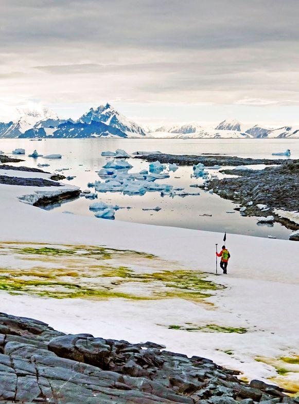 Zee-ijs kleurt groen op Antarctica