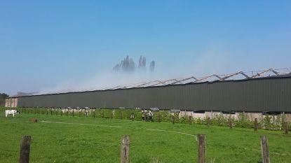 70.000 kippen overleven stalbrand in Vlimmeren niet