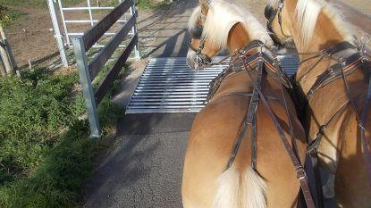 Drama nadat paarden vastraken in veerooster tijdens tocht: een paard niet meer te redden, twee andere gewond