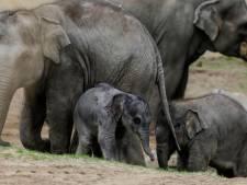 Utrechtse onderzoekers zamelen geld in tegen olifantenherpes