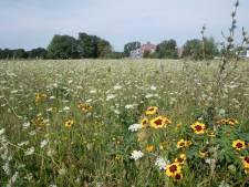 Buren vrezen komst Hornbach in Almelo: provincie nu aan zet