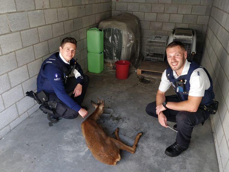 Het hert werd opgevangen door de politiemannen