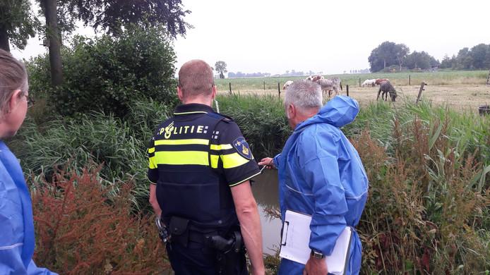 De NVWA controleert de koeien op gezondheid tijdens een inspectie. Jaarlijks worden 300 risicobedrijven onder verscherpt toezicht gesteld vanwege dierenverwaarlozing.