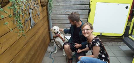 Vermiste Duitse hond duikt in Meddo, 60 kilometer van huis
