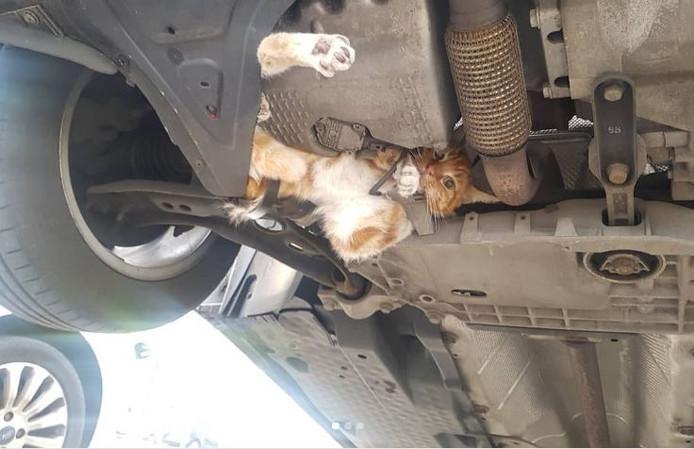 Kater James zat knel onder de motorkap.
