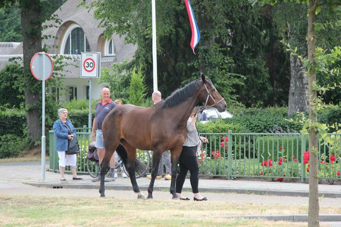 Het paard dat werd gered
