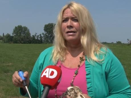 Zwanenbeschermster Saskia van Rooy: Ik ben door een hel gegaan