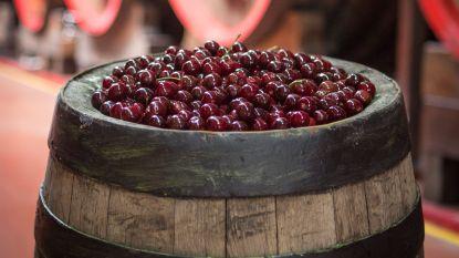 Mort Subite koopt 120.000 kilogram kersen voor kriek- en lambiekbieren
