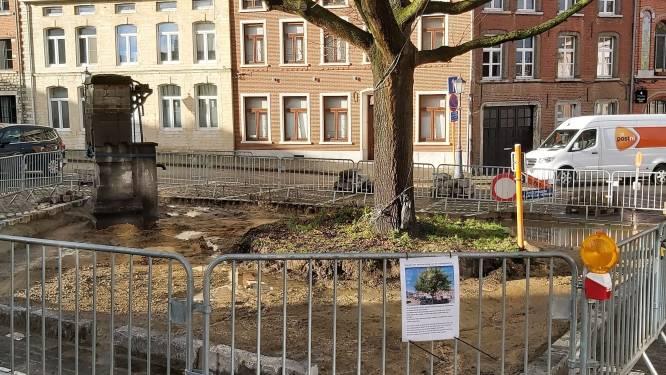 Twee parkeerplaatsen sneuvelen voor vrijheidsboom