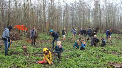 Dag van de Natuur: populieren maken plaats voor meer diversiteit in bos rond Schamperij