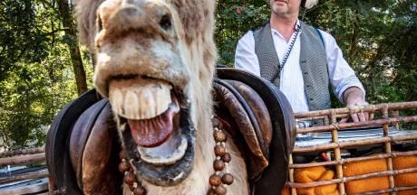 'Is 'ie echt?' De ezel van Jacco wekt verbazing in Nijmegen